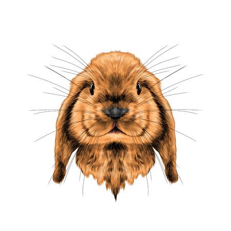 머리 빨간 토끼 전체 얼굴 대칭, 스케치 벡터 그래픽 컬러 사진