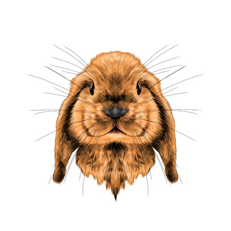 head red rabbit full face symmetrical, sketch vector graphics color picture Imagens - 78550416
