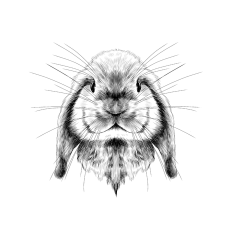 the rabbits head full face symmetrical, sketch vector graphics black and white drawing