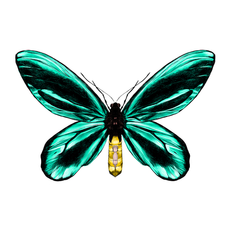 Turquoise butterfly with black pattern on the wings of the symmetric top view sketch vector graphics color picture.