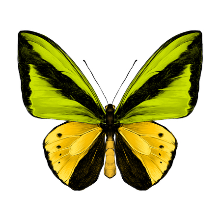 Butterfly symmetric top view of green and yellow colors, sketch vector graphics color picture. Illustration