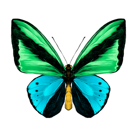 Butterfly symmetric top view green and blue colors, sketch vector graphics color picture. Illustration