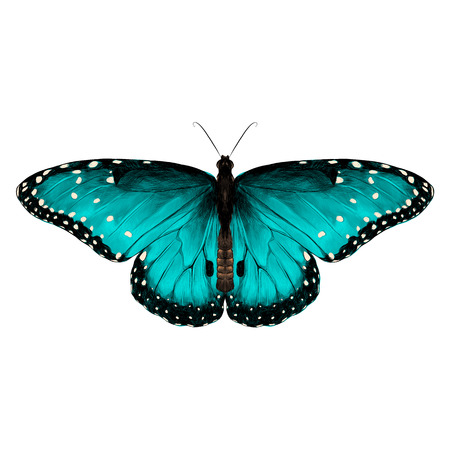 Butterfly symmetric top view of turquoise with spots , sketch vector graphics color picture. Ilustracja