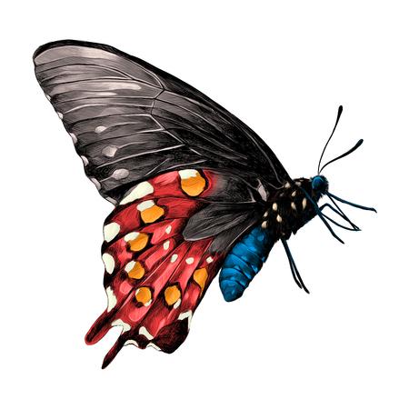 Schmetterling mit einem blauen Körper, roten und grauen Flügeln und orange Flecken auf der Seitenansicht der Flügel, Skizzenvektorgrafik-Farbbild Vektorgrafik