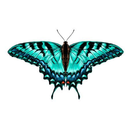 turquoise butterfly with blue pattern on the wings of the symmetric top view sketch vector graphics color picture