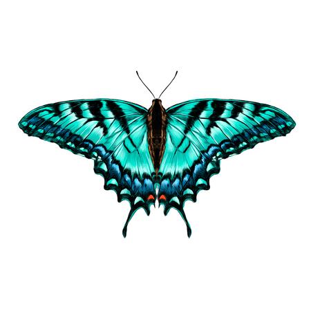 대칭 가기의 날개에 파란색 패턴이있는 청록색 나비 스케치 벡터 그래픽 컬러 그림 일러스트