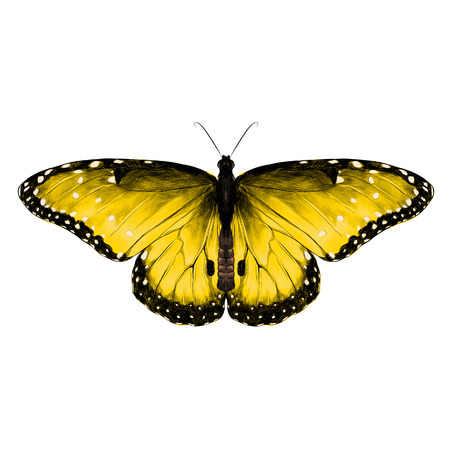 butterfly symmetric top view yellow with spots , sketch vector graphics color picture