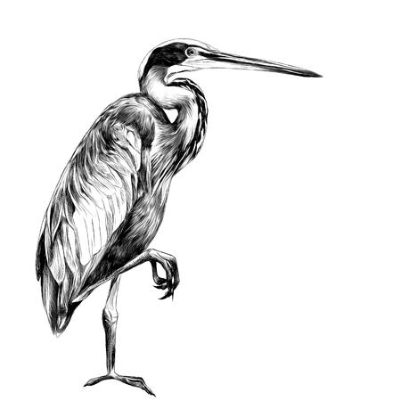아가미 새는 한쪽 다리를 옆으로 세우고 거리를 바라보며 벡터 그래픽을 흑백으로 그리기 일러스트