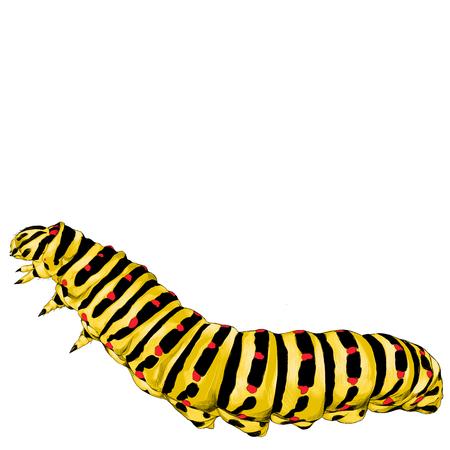 黄色いイモムシが這って、ベクトル グラフィック カラー スケッチ