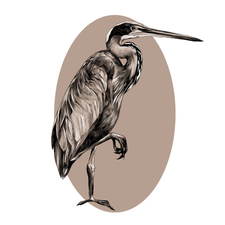 AGAMI bird stands on one leg sideways and looking into the distance, sketch vector graphics black and white pattern on a beige background oval