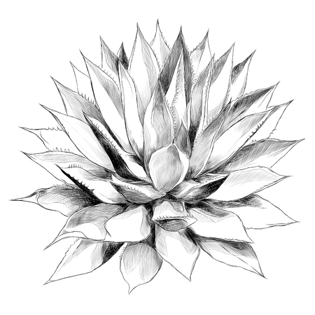 Top view sketch vector graphics black and white drawing of bush