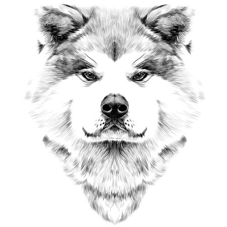 총구 개 품종 아키타 이누, 전면 대칭 찾고 전면, 스케치 벡터 그래픽 흑백 그림