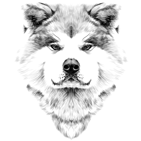 Muzzle dog breed Akita inu, full face looking forward symmetrically, sketch vector graphics black and white drawing