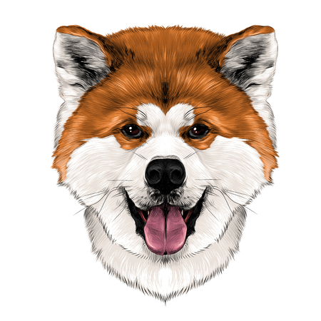Muzzle dog breed Akita inu with his tongue hanging out, full face looking forward symmetrically, sketch vector graphics color picture