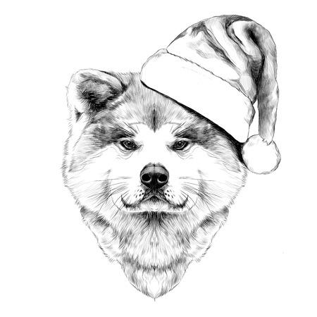 akita: Muzzle dog breed Akita inu in Santa hat, full face looking forward symmetrically, sketch vector graphics black and white drawing Illustration