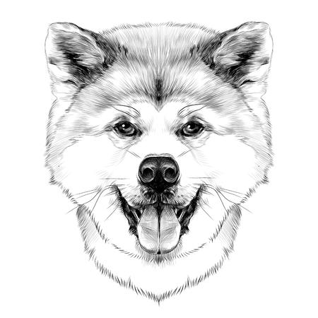 マズルの犬舌をだらり、楽しみに対称的に完全な顔の秋田犬を繁殖、ベクトル グラフィックは、黒と白の図面をスケッチ
