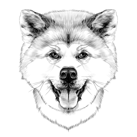 Muzzle dog breed Akita inu with his tongue hanging out, full face looking forward symmetrically, sketch vector graphics black and white drawing