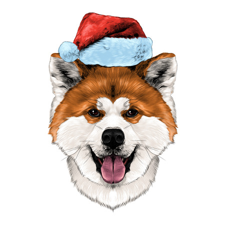 akita: Muzzle dog breed Akita inu with his tongue hanging out in Santa hat, full face looking forward symmetrically, sketch vector graphics color picture