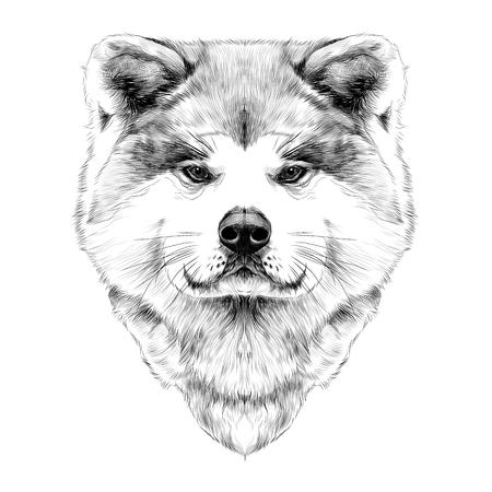 akita: Muzzle dog breed Akita inu, full face looking forward symmetrically, sketch vector graphics black and white drawing