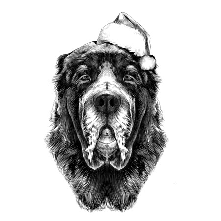 the head of the dog breed Alabai or the Central Asian shepherd dog in Santa hat full face symmetry, sketch vector graphics black and white drawing