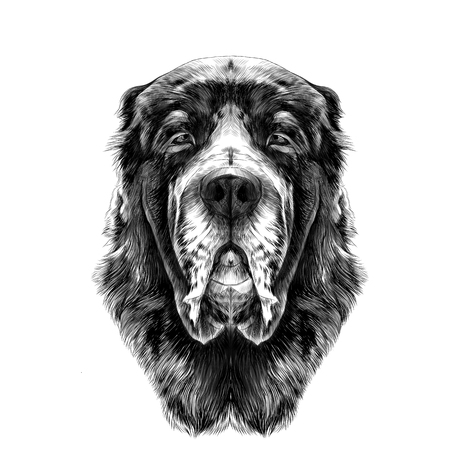the head of the dog breed Alabai or the Central Asian shepherd dog full face symmetry, sketch vector graphics black and white drawing