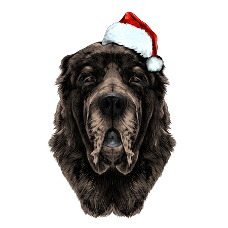 dog head brown wool breed Alabai or the Central Asian shepherd dog in Santa hat full face symmetry, sketch vector graphics color picture