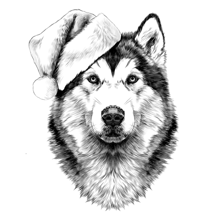 Dog breed Alaskan Malamute head in a Santa hat looking right symmetry sketch vector graphics black and white drawing