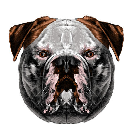 Dog breeds American Bulldog head symmetry looks right sketch vector graphics color picture