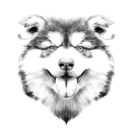 Dog breed Alaskan Malamute puppy with his tongue hanging out, head looking right symmetry sketch vector graphics black and white drawing with no outline Illustration