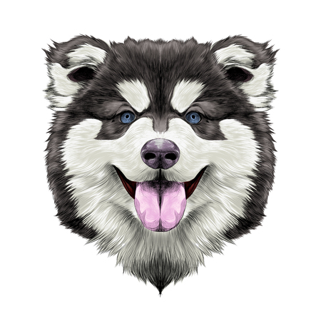 Dog breed Alaskan Malamute puppy with his tongue hanging out, head looking right symmetry sketch vector graphics color picture Illustration
