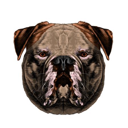 개 품종 미국 불독 머리 대칭 보이는 오른쪽 스케치 벡터 그래픽 컬러 사진