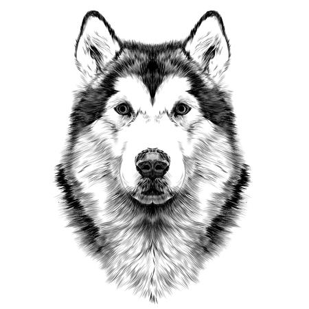 Race de chien Alaskan Malamute symétrie de la tête ressemble à droite croquis graphiques vectoriels dessin noir et blanc sans contour