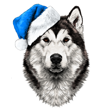 Dog breed Alaskan Malamute head in a Santa hat looking right symmetry sketch vector graphics color picture Illustration