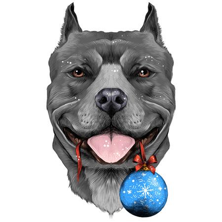 Perro cría el pit bull americano Cabeza de color gris de Terrier con una bola de Navidad en los dientes boceto gráficos vectoriales imagen en color Foto de archivo - 80549961