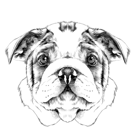 犬種アメリカン ブルドッグ頭ベクトル グラフィック白黒デッサンします。
