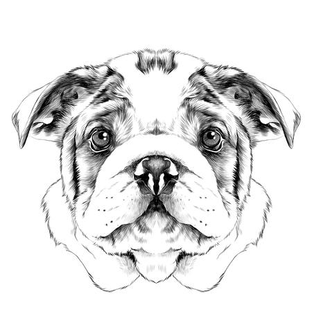 개 품종 미국 불독 머리 스케치 벡터 그래픽 흑백 드로잉