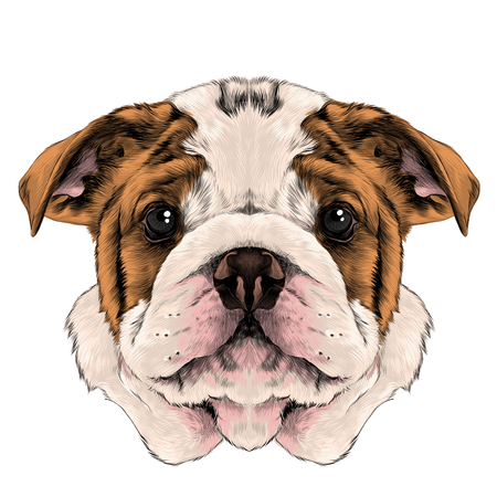dog breed American bulldog head with white and red color, sketch vector graphics color picture