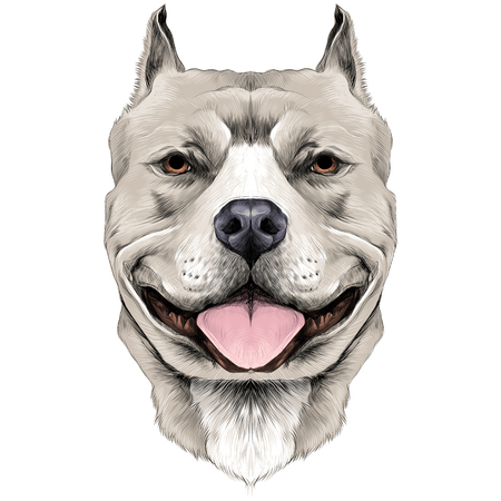 dog breeds the American pit bull Terrier white color head sketch vector graphics color picture