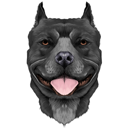 dog breeds the American pit bull Terrier black in color head sketch vector graphics color picture