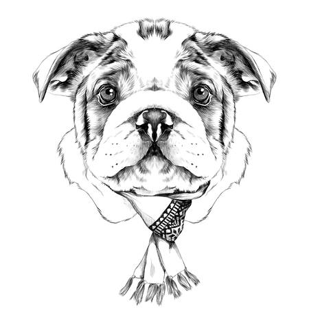 dog breeds American bulldog head with a Christmas scarf on the neck, sketch vector graphics black and white drawing Illustration