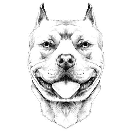 dog breeds the American pit bull Terrier head sketch vector graphics black and white drawing Иллюстрация