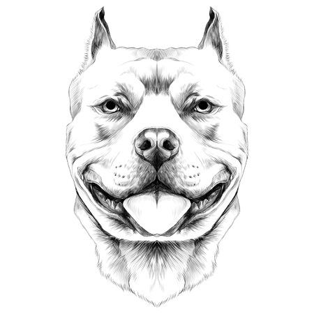 hond fokt de Amerikaanse pitbull Terrier hoofd schets vectorafbeeldingen zwart en wit tekening Stock Illustratie