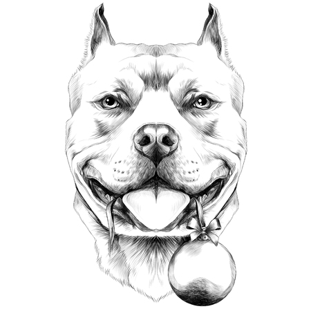 black and white pit bull: dog breeds the American pit bull Terrier head with a Christmas ball in the teeth sketch vector graphics black and white drawing