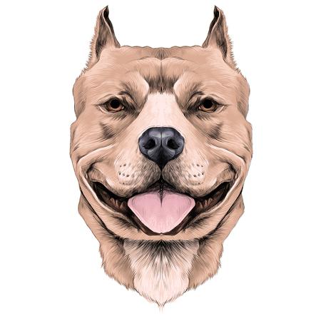 강아지 품종은 미국 핏 불 테리어 갈색 머리 머리 스케치 벡터 그래픽 컬러 사진 일러스트