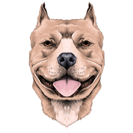dog breeds the American pit bull Terrier brown color head sketch vector graphics color picture