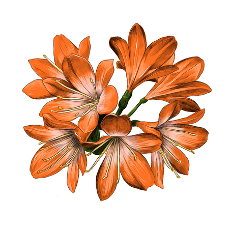 Lily bouquet 7 flowers orange color sketch vector graphics color picture