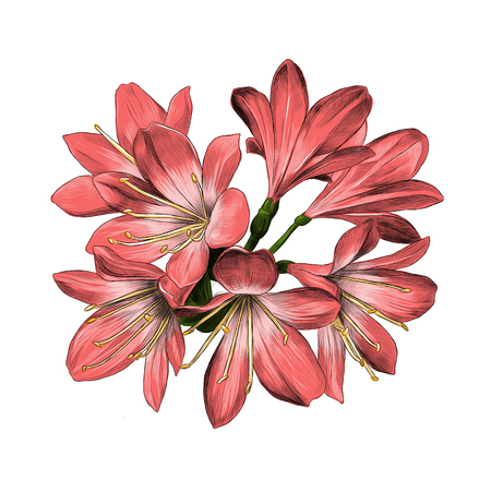 Lily bouquet 7 flowers pink sketch vector graphics color picture