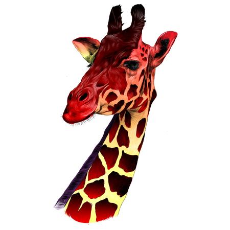 La tête d'une girafe croquis vecteur graphique dessin couleur rouge et jaune Banque d'images - 80713587