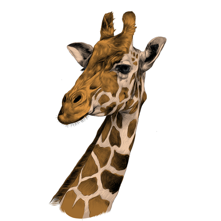 the head of a giraffe sketch vector graphics color picture brown Stock Illustratie