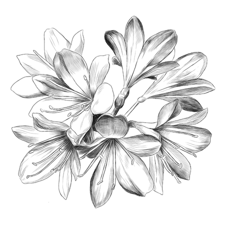 budding: Lily bouquet 7 flowers sketch vector graphics black and white drawing Illustration